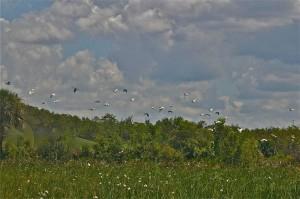 prairie-rose-flynn