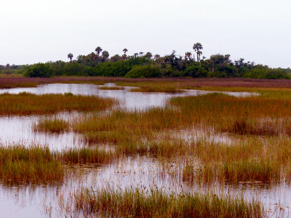 Salt marsh is also part of the Fakahatchee Strand. Photo by Patrick Higgins.