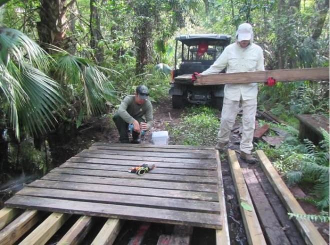 Fakahacker Swamp Bees
