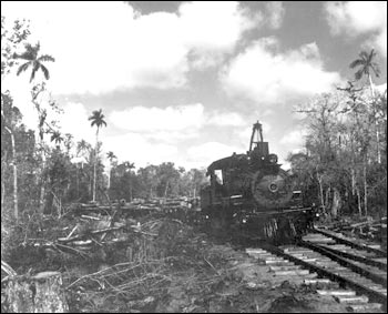 To get valuable timber to the train at Copeland, miles of tram roads were constructed.