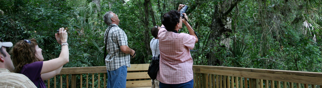 Tour the Big Cypress Bend Boardwalk