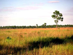 From open prairie to shaded wetland, natural beauty abounds at Fakahatchee.