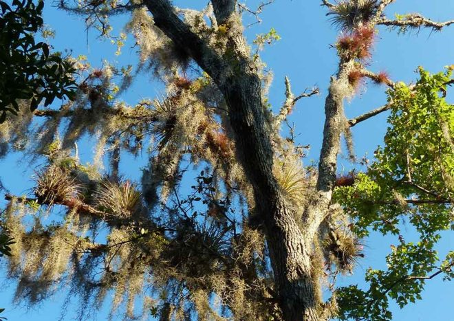 Epiphytes in the canopy